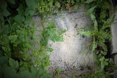 BiodegradableResearchProject4